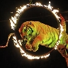 Цирки в Началово